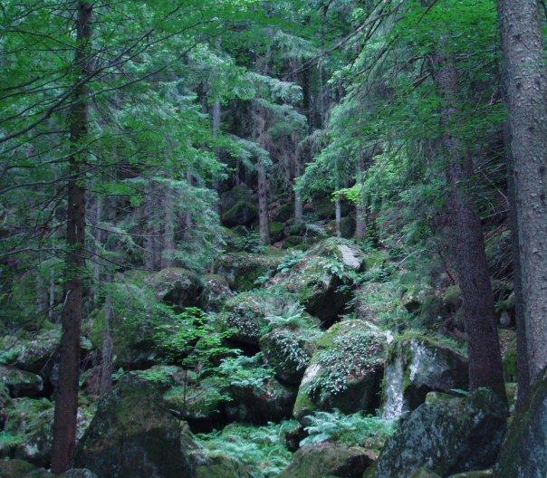 foreste di sassi italy