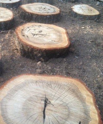 garden path with repurposed fallen trees